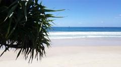 Byron Bay Beach Palm 4K Stock Footage