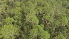 Aerial Corsica Drone top forest trees Stock Footage
