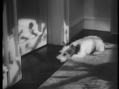 Dog running into room when man opens door, 1930s Stock Footage