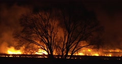 Stock Video Footage of Night Fire In The Field. Dry grass burning around big tree. Amazing picture
