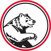 Stock Illustration of California Grizzly Bear Swipe Paw Circle Retro