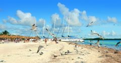 4K Seagulls Take Flight on Beach on Caribbean Tropical Island Stock Footage