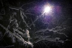 Street light shining through falling snow - stock photo