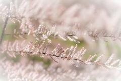 Pink tree branches with abstract nature background. Stock Photos