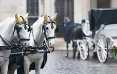 Horses and carriage on stefansplatz in Vienna. Stock Photos