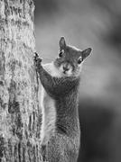 I See You Eye Contact with a Squirrel in Black and White Stock Photos
