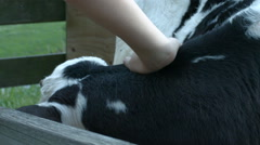 A cow in a wooden pen on a farm, calf shot in slow motion Stock Footage