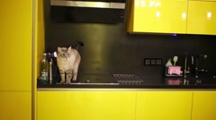 The cat is on the kitchen stove wags its tail in the apartment Stock Footage
