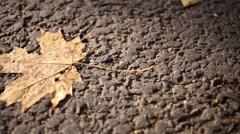 Orange maple leaf on the asphalt and the shadows of people Stock Footage