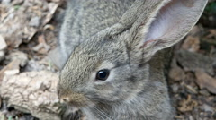 Rabbit is Beautiful Animal of Nature Stock Footage