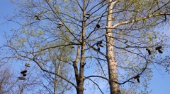 Many shoes related in pairs hangs on a big tree in the forest Stock Footage