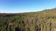 360 Degree Forest View Stock Footage