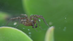 Spider jumping Stock Footage