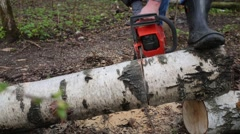 The man in the woods sawing birch using a chainsaw Stock Footage