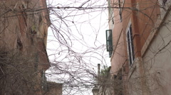 Twisted branches in Trastevere street Stock Footage