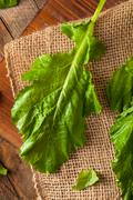 Raw Organic Turnip Greens Stock Photos
