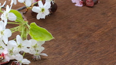 Flowering branch with white delicate  surface. Declaration of love, spring Stock Footage