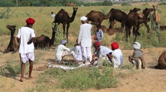 Men and herd camels attended the annual Pushkar Camel Mela , India - stock footage