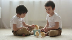 Two sweet little children, preschool boys, brothers, playing with little chic Stock Footage