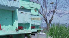Bees hovering super slow motion around hives Stock Footage