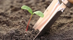 Man pull out a young plant from the soil Stock Footage