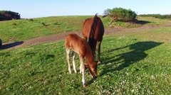 Mare with her foal in the countryside from Portugal Stock Footage