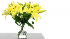 Yellow Lily Time-lapse Stock Footage