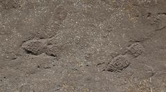 footprints in the mud with gravel - stock photo