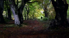Backlit shot of a man walking alone in the immensity of the wood in autumn. Stock Footage