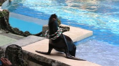 Sea lion show in the Safari World. Bangkok, Thailand - stock footage