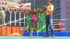 Video 1920x1080  Orangutan show in Safari World. Bangkok, Thailand Arkistovideo