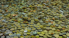 Many coins from various countries background. Stock Footage