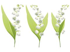Lily of the Valley - stock illustration