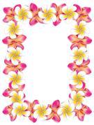 Stock Illustration of White and pink frangipani flowers frame