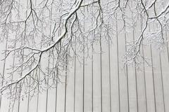 Snowy tree branches and concrete wall - stock photo