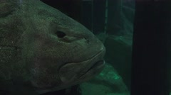 Close up large fish head, Stock Footage
