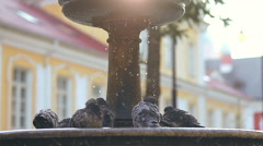 pigeons drink and bathe in the fountain - stock footage