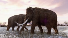 Woolly Mammoths Grazing Animation Stock Footage