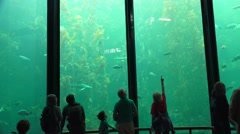 Discovering the kelp forest Stock Footage