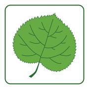 Linden leaf green icon Stock Illustration