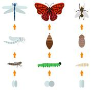insect birth life - stock illustration
