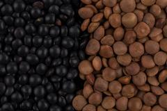 mix of lentils - stock photo
