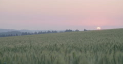 A field during sunset - stock footage