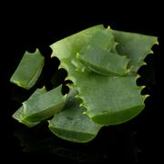 Sliced aloe leaf Stock Photos