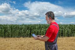 Agricultural scene, farmer or agronomist inspect corn field Stock Photos
