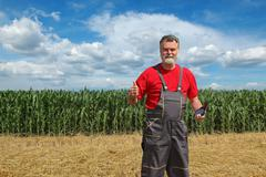 Agricultural scene, farmer in wheat and corn field - stock photo