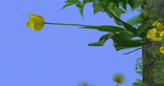 Yellow Tulip Field Grass Wild Flowers on Blue Screen Sunny Summer Day Green Stock Footage