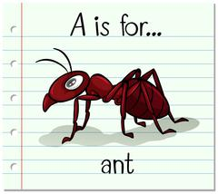 Flashcard letter A is for ant Stock Illustration