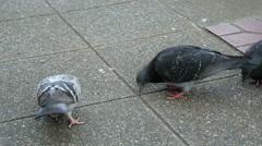Pigeons, pecking, Seattle, street Stock Footage