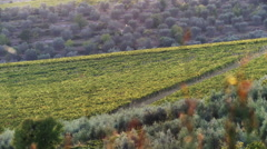 Wine country landscapes slider Stock Footage